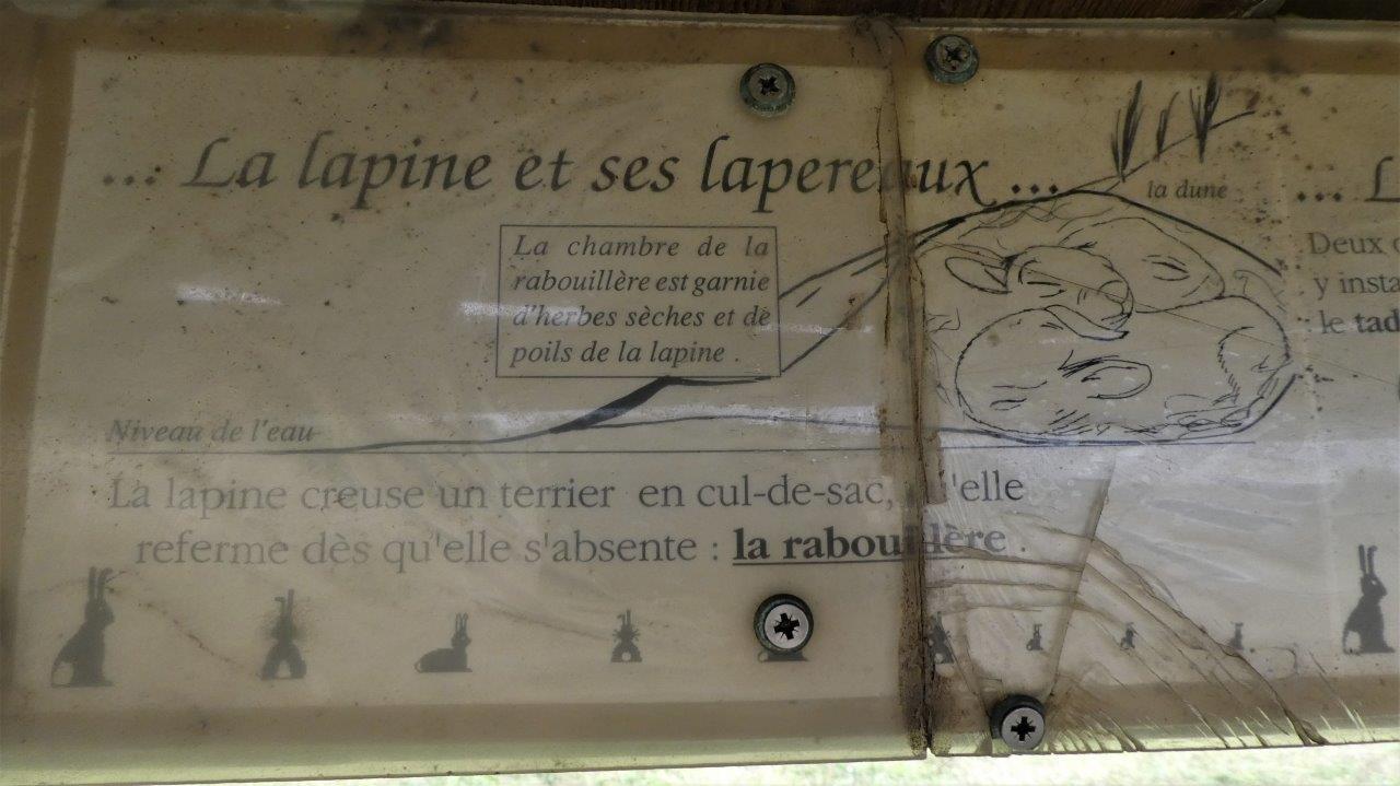 Platier d'Oye AD (5)